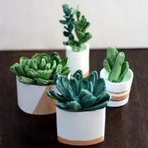SucculentsSquare1