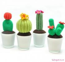 cactus-haken