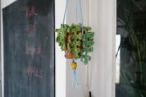 crochet_fern1-1024x683