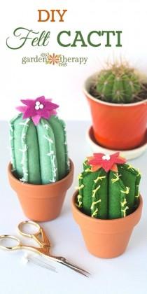 Cactus Archieven Freubelweb Freubelweb